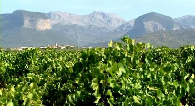 Mallora Vineyards travel and tours